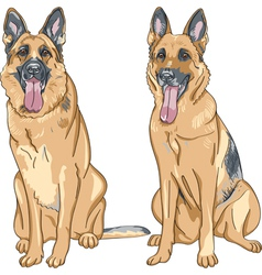 Two dog german shepherd breed vector