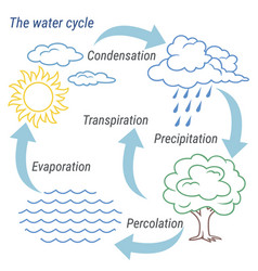 Water cycle line vector