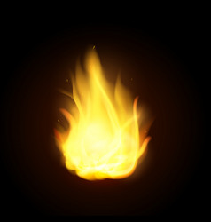 realistic fire flames burning spruts of vector image