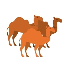animal figure of camels cartoon vector image