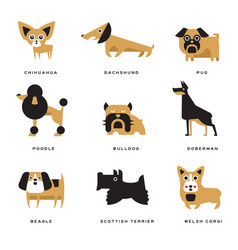 Different dogs breeds characters set of vector