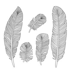 hand drawn feathers outline silhouettes vector image