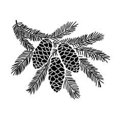 Hand drawn spruce tree branch vector