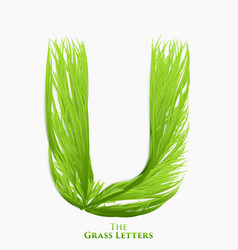 Letter u of juicy grass alphabet green u vector