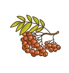Red rowan cartoon drawing vector image