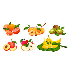 set combining fresh fruits whole and sliced vector image