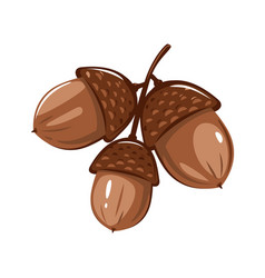 Three brown oak acorns isolated vector