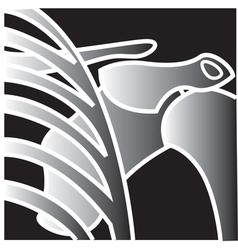 Xray shoulder bones vector