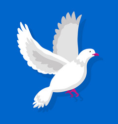 Flying white pigeon isolated on blue background vector