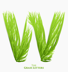Letter w of juicy grass alphabet green w vector