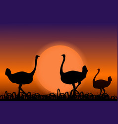 ostriches in africa black silhouettes on sunset vector image