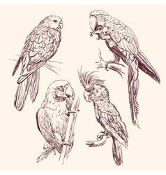 Parrot collection llustration vector image