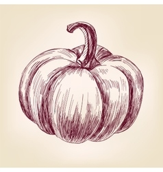 Pumpkin hand drawn llustration realistic vector