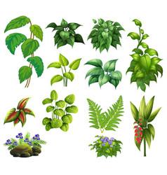 set of decor plant vector image