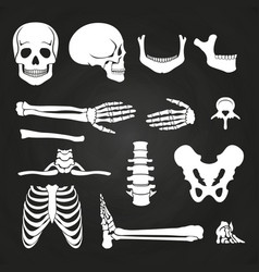 human bones collection on chalkboard vector image