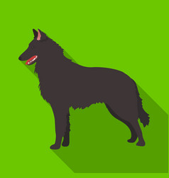 the dark belgian wolf belgium single icon in flat vector image