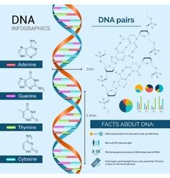 Dna infographics set vector