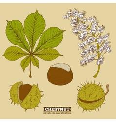 Blossom Chestnut Botanical vector