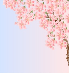 Cherry sakura blossoms Spring background vector