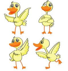 Four ducklings vector