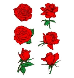 Red roses buds icons Flower sketch emblem vector