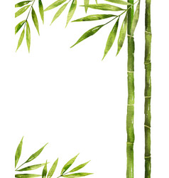 Watercolor bamboo stem with green leaves vector