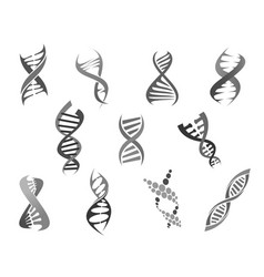 gene dna helix isolated icons set vector image