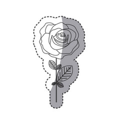 silhouette rose with petals and leaves icon vector image