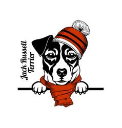 Christmas jack russell terrier dog - peeking dog vector