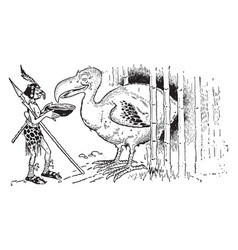 dodo vintage vector image
