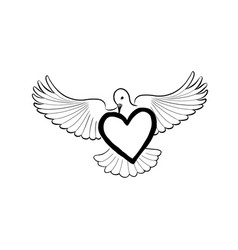 Love heart brought by flying bird dove valentine vector