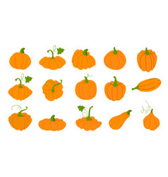 orange pumpkins in flat style isolated on white vector image