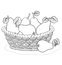 basket with pears contours vector image