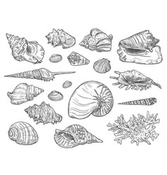 Corals and seashells isolated sketches vector