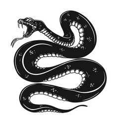 poisonous snake in engraving style design element vector image