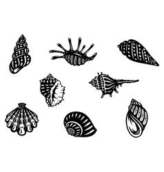 Sea shells and mollusks vector image