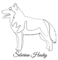 Siberian husky dog outline vector