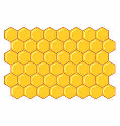 a honeycomb vector image