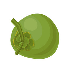 flat icon of whole young green coconut vector image