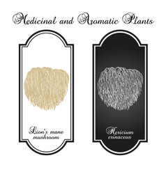 Lions mane mushroom hericium erinaceus edible and vector