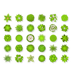 top view tree landscape plants and trees vector image