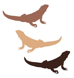 Bearded dragon silhouettes vector image