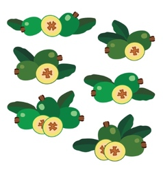 Feijoa Different composition of berries icons vector