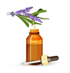 Lavender extract oil in glass bottle with pipette vector