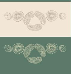 Pieces of fruit sketch vector