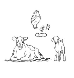 Sketch farm animal and birds young goat vector