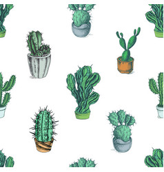 sketch hand drawn colorful cactus vector image