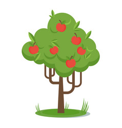 apple picking tree with red apple flat vector image