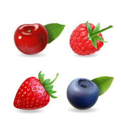 Berry set forest realistic sweet fruit icon vector