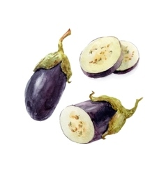 Watercolor hand drawn eggplant vector image